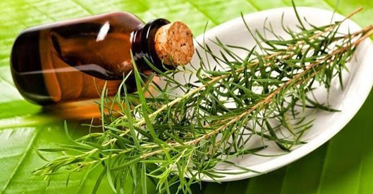 Масло чайного дерева поможет устранить не приятный запах под мышками