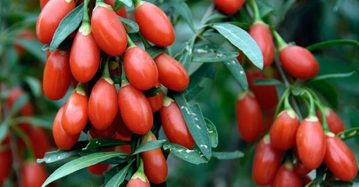 Маска с ягодами годжи