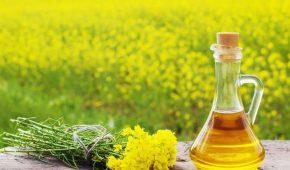 Миниатюра к статье Что такое рапсовое масло и где его применяют — секреты выбора и хранения