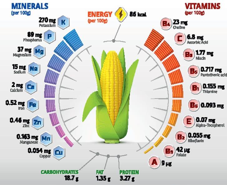 Химический состав кукурузы