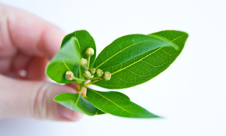 Чем лолезны листья лавра для женщин